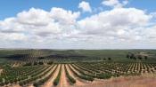 """""""Alentejo, azeite e água"""" aborda problemas ambientais e sociais da região"""