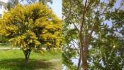 CIMAA lança concurso para prevenção, controlo e erradicação de espécies exóticas no Alto Alentejo