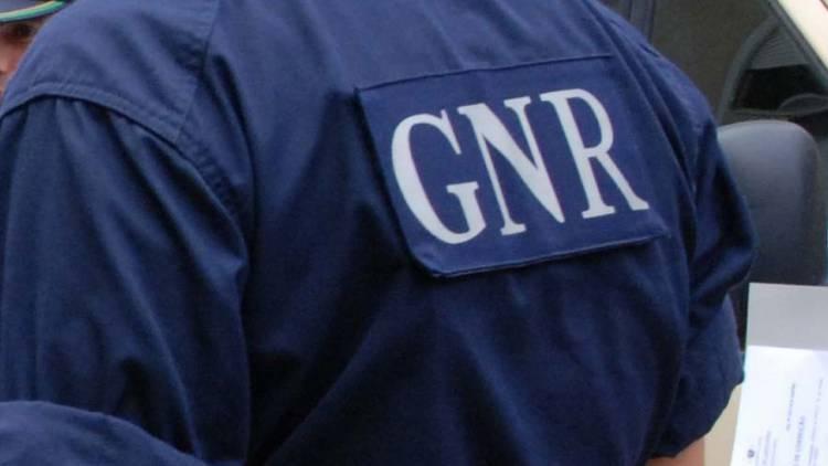 GNR faz mega apreensão da canábis no Alto Alentejo