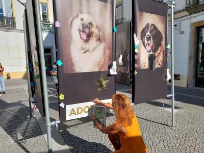 """Évora: Exposição """"FICA – VIDAS CANINAS INTERROMPIDAS"""" permitiu adopção de 9 cães!(c/fotos)"""