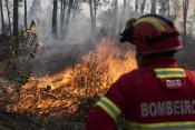 Incêndio em Montargil mobiliza mais de 60 operacionais