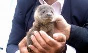 Conservação da lontra no Alentejo será o tema do próximo Webinar do ICNF