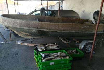 Reguengos de Monsaraz: GNR identifica homem de 33 anos por pesca ilegal e apreende 200 kg de peixe