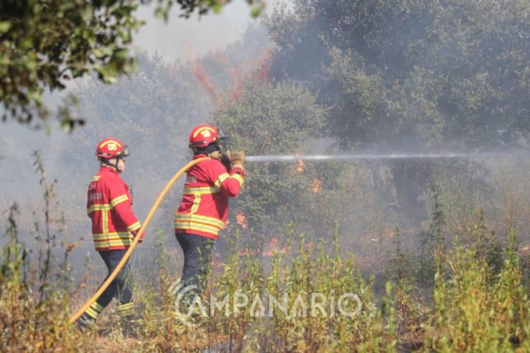 Meia centena de bombeiros combatem incêndio em Vimieiro