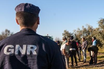 Sousel: 5 homens e 4 mulheres detidos em flagrante delito a furtar azeitona