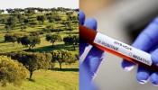 COVID-19/Dados DGS: Alentejo regista mais 50 novos casos