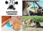 """""""No confinamento adoptaram-se mais animais; Volta-se à rotina e agora não há disponibilidade para eles"""" diz Susana Cunha, responsável pelo Cantinho dos Animais em Évora(c/som)"""