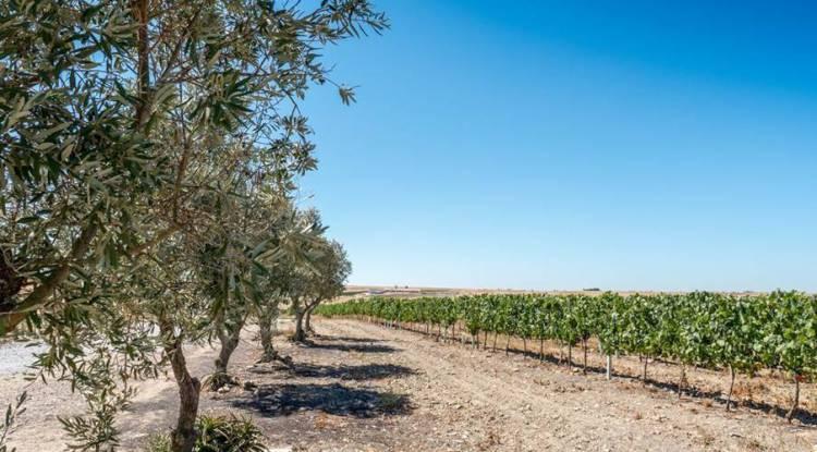 Herdade das Fontes Bárbaras triplica capacidade de produção de vinho com investimento de meio milhão de euros