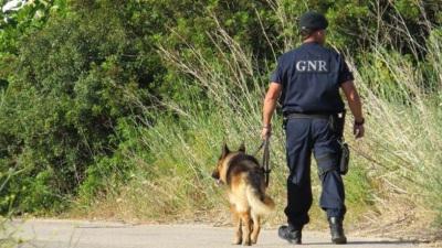 Alandroal: Família e autoridades procuram idosa desaparecida ontem na zona de Capelins