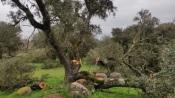 Monforte: Ministério Público investiga abate ilegal de azinheiras