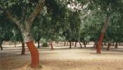 Corticeira Amorim reforça a mancha de sobreiros no Alentejo, plantando este sábado 2000 sobreiros em Alcácer do Sal