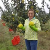 Marmelos Aurora – A fruta do Coração Em breve terá loja online com fabrico próprio de GIN e Licores de Marmelo