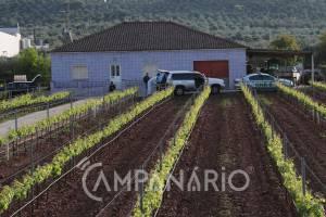 GNR confirma que idoso encontrado morto em Borba foi assassinado