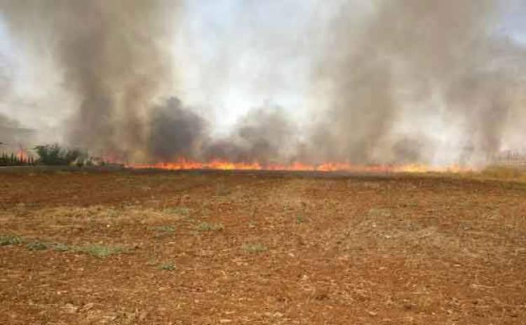 Incêndio agrícola deflagra no concelho de Estremoz