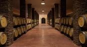 Vinhos do Alentejo na vanguarda da sustentabilidade, primeiros vinhos chegam este mês às prateleiras