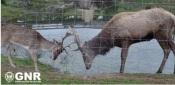 Crato: GNR regista detenção ilícita de espécies cinegéticas em cativeiro