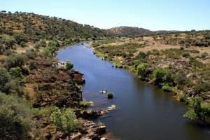 ICNF cria Zona de Intervenção Florestal em Mourão, Moura e Barrancos