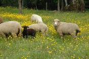 """Agricultores do Sul contra """"desmantelamento"""" da direção-geral de veterinária"""