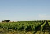 Fronteira: Impar Wines pretende triplicar faturação para 4,5 milhões até 2025