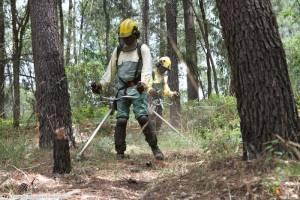 Sousel e mais 22 freguesias alentejanas têm até 15 de Março para limpar terrenos, determina o Governo