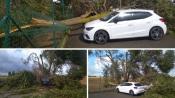 Tornado passou por Beja e derruba dezenas de árvores e destrói carros