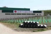 Adega da Ervideira avança com produção de azeite