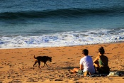 No Alentejo há uma praia onde os cães podem entrar! Saiba tudo aqui